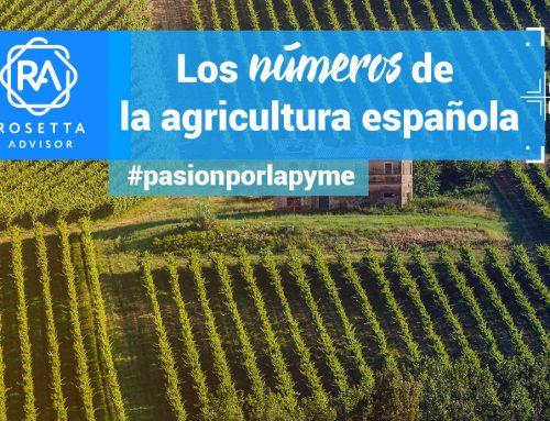 La agricultura, uno de los motores de España. Los datos de 2017