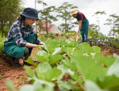 En riesgo la recogida de cosechas por falta de temporeros