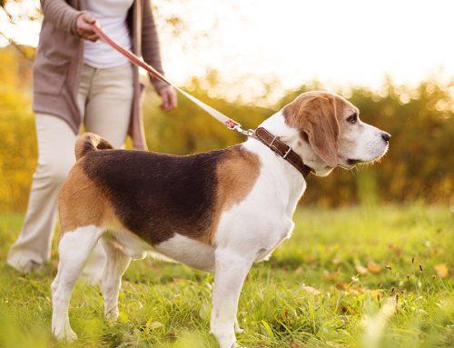 Estado de alarma: ¿Cómo debo pasear a mi perro?