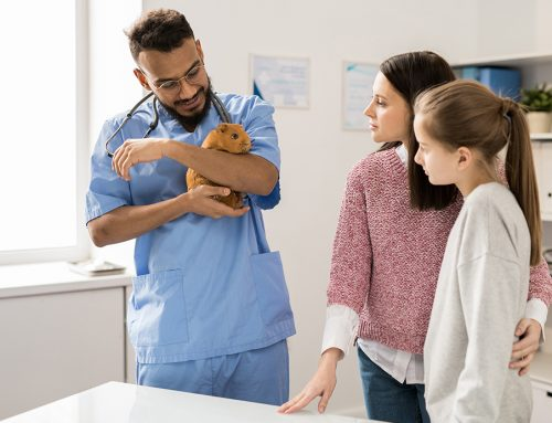 ¿Cómo puedo proteger mi clínica veterinaria del coronavirus?