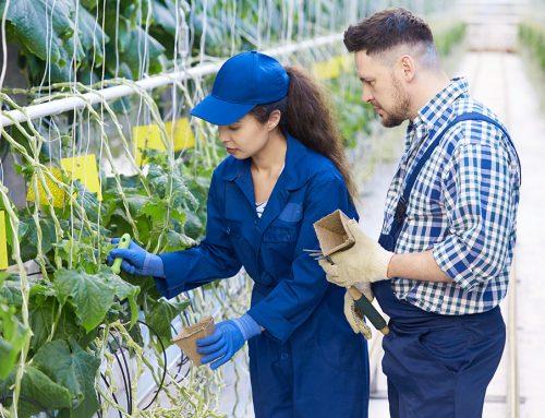 Agricultura propone contratar parados ante la falta de mano de obra en el campo