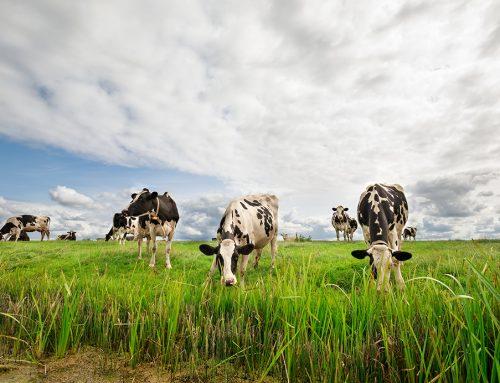 El coronavirus golpea fuerte a la ganadería española