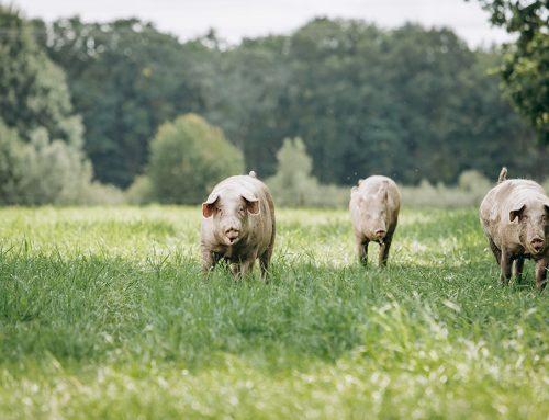 La ganadería sin futuro