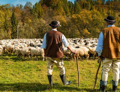 Los pastores enseñan a combatir la soledad durante el coronavirus