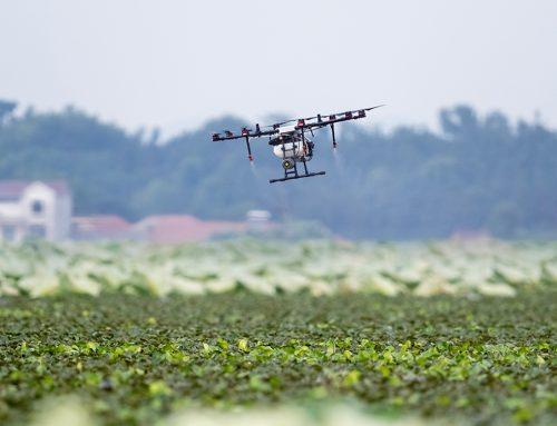 Satélites y drones al servicio del riego agrícola