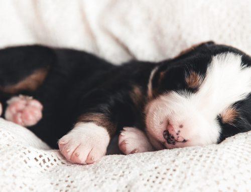 El abandono de perros aumenta con la desescalada por el coronavirus y enciende todas las alarmas